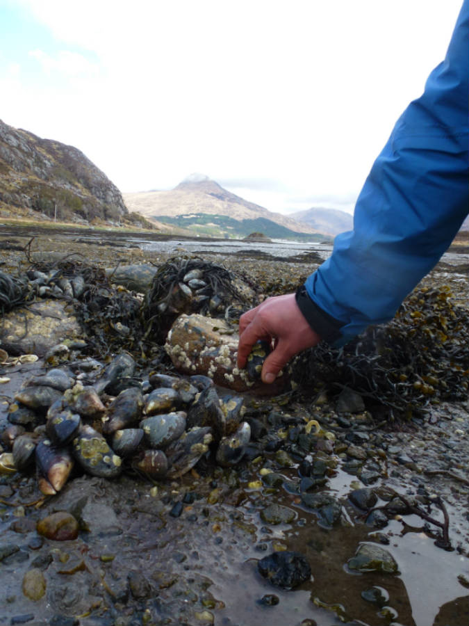 Muscle picking in Knoydart